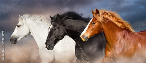 Fotografia, Obraz Horse herd portrait run fast against dark sky in dust