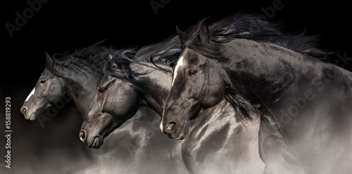 Foto op Canvas Paarden Black stallions with long mane run on dark background