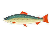 Illustration Of A Rainbow Trout