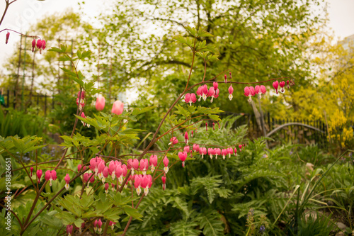 Cadres-photo bureau Jardin Photo of delicate pink flowers resembling jewerly