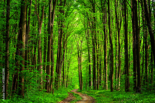 Papiers peints Forets forest trees. nature green wood sunlight backgrounds. sky