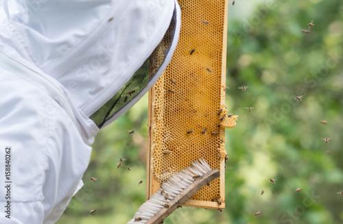 Photo récolte de miel, apiculture