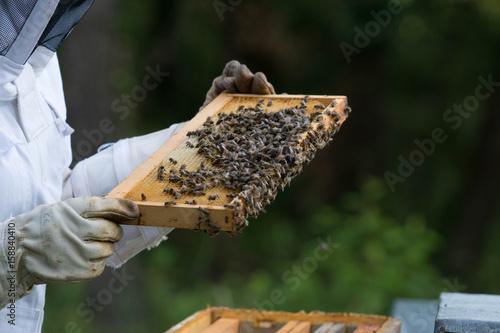 apiculture Canvas Print