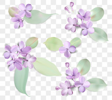 Pastel Background With Lilac F...