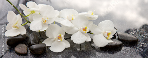 Foto op Plexiglas Orchidee Spa stones and white orchid on gray background.