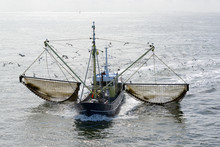 Fishing Boat Dragging A Net Th...