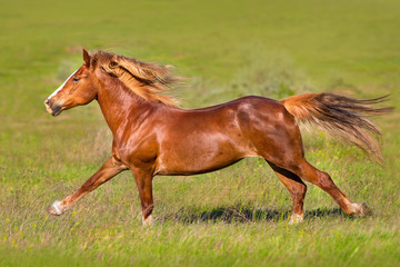 Red horse with long mane run gallop on green meadow