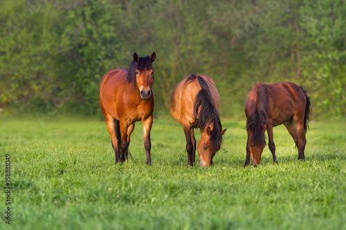 Photo  Horses grazing on green grass