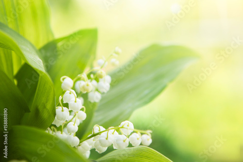 Deurstickers Lelietje van dalen Lily of the valley. Nature flowers in sunny day