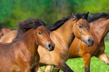 Horses portrait in motion in herd