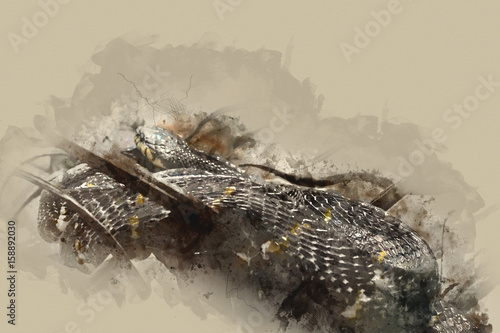 Watercolor painting snake, Abstract Snake on watercolor background, Watercolor b Poster