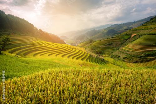 Foto  Vietnam Beautiful Sunlight landscape rice field terrace