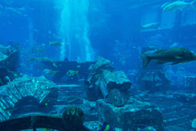 Lost Chambers Aquarium Inside ...