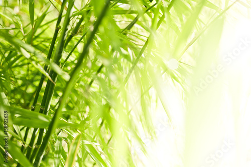 Poster Bamboe Green bamboo background