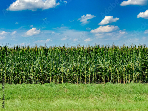 Photo Texas Corn Field