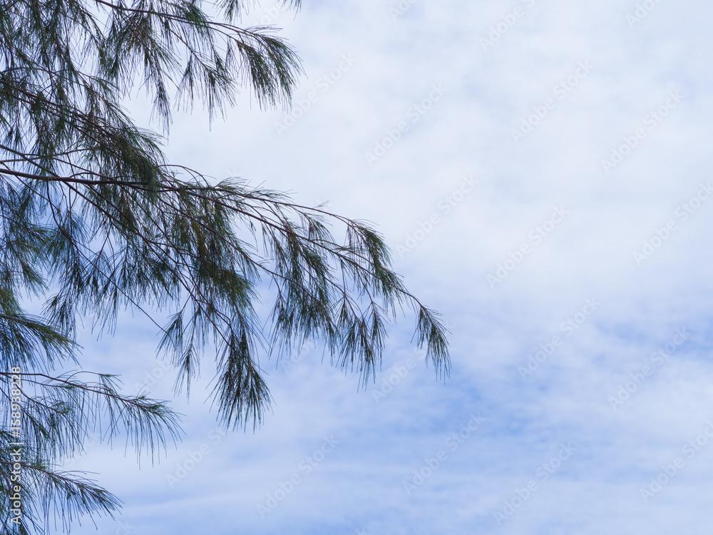 Pine tree silhouette on blue sky background