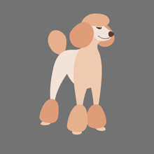 Poodle Dog  Vector Illustratio...