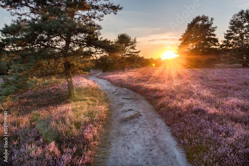 Cuadros en Lienzo Lüneburger Heide, Sonneuntergang