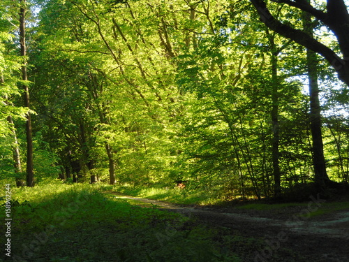 Papiers peints Forets Waldweg beleuchtet durch Abendsonne