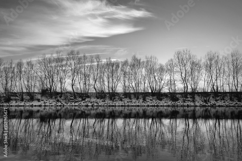 Winter on river Sava with tree reflecting in the water Wallpaper Mural