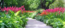 Flowering Tulips In The Garden