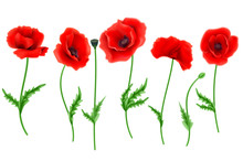 Red Poppy Flower Isolated On W...
