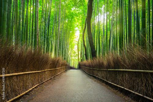 Foto op Plexiglas Bamboe Bamboo forest of Arashiyama near Kyoto, Japan