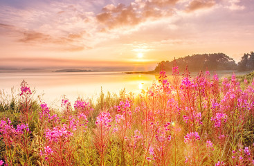 Fototapeta Do salonu Sunrise scenery over Northern sea in Sweden, coast line with field flowers, green grass at foreground, epic sunrise sky in background.