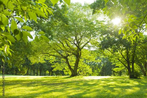Staande foto Lente 公園 木漏れ日