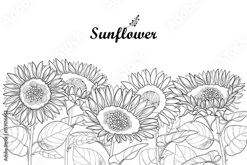 Vector composition with outline open Sunflower or Helianthus flower and leaves isolated on white background. Floral border in contour style with ornate Sunflowers for summer design or coloring page.