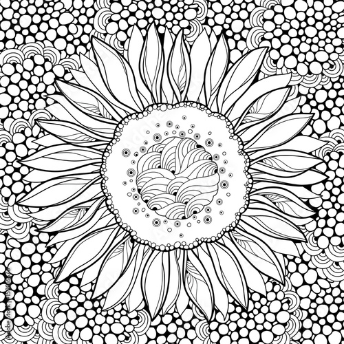 Vector Composition With Outline Open Sunflower Or Helianthus