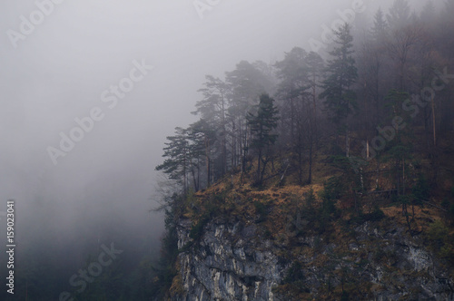 Fotografering  Mysterious alpine forest covered by mist