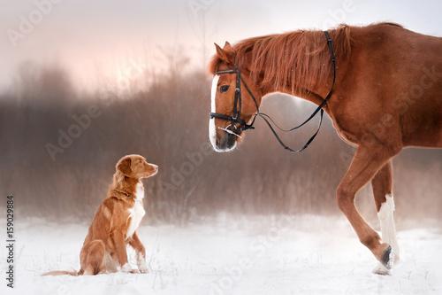 pies-i-kon-na-zewnatrz-w-zimie