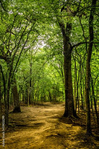 brama-z-drzew-i-magiczna-sciezka-prowadzaca-wglab-lasu