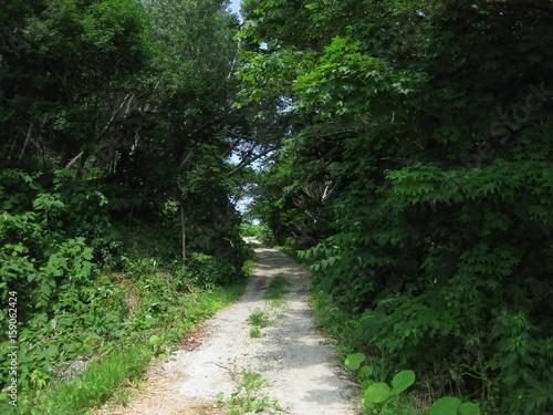 Foto op Canvas Weg in bos forest road,hokkaido,japan