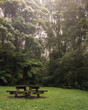Picnic table in Lush green foggy forest
