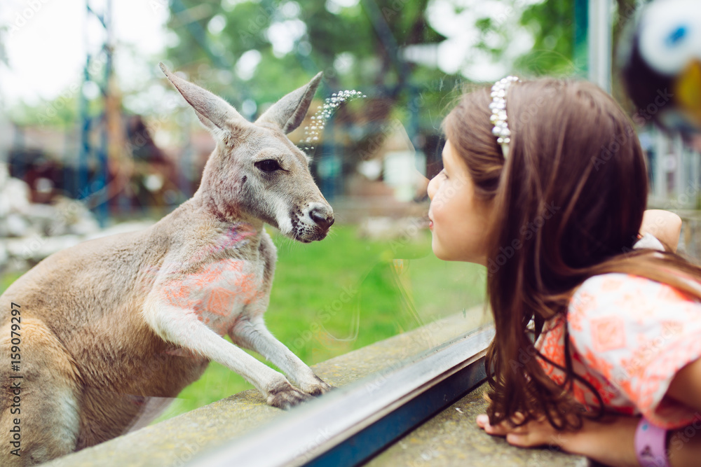 Fototapeta Cute little girl at zoo looking at kangaroo.