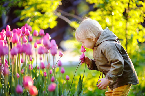 Fototapeta Little boy smelling pink tulips in the garden at the spring or summer day obraz
