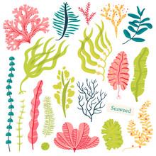 Sea Plants And Aquatic Marine ...