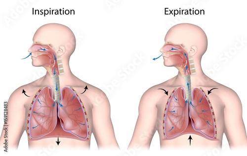 Cuadros en Lienzo  Breathing cycle, in and out