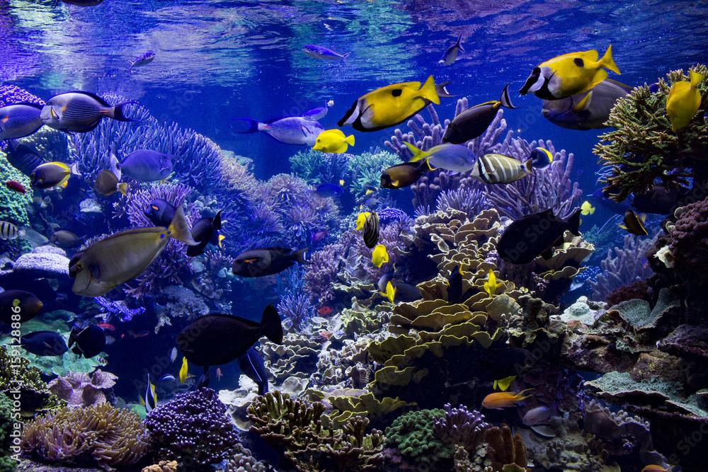 Fototapeta Aquarium reef