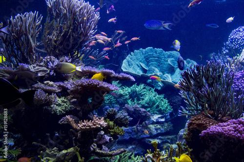 Fotobehang Koraalriffen Reef view