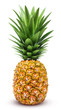 canvas print picture - Pineapple isolated. One whole pineapple with green leaves isolated on white background with clipping path
