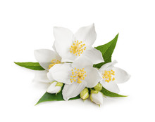 White Flowers Of Jasmine On Wh...