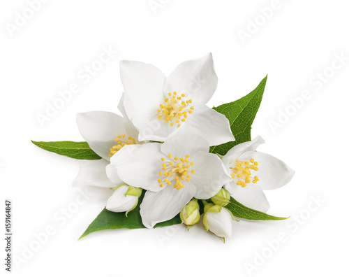 White flowers of jasmine on white isolated background Tableau sur Toile