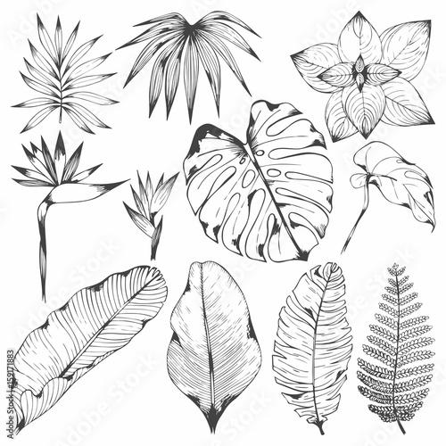Obraz Tropical plants. Set of vector illustrations with tropical branches. Hand drawing for design - fototapety do salonu