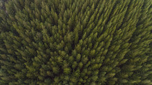 Aerial View Of Trees And Road In Plantation
