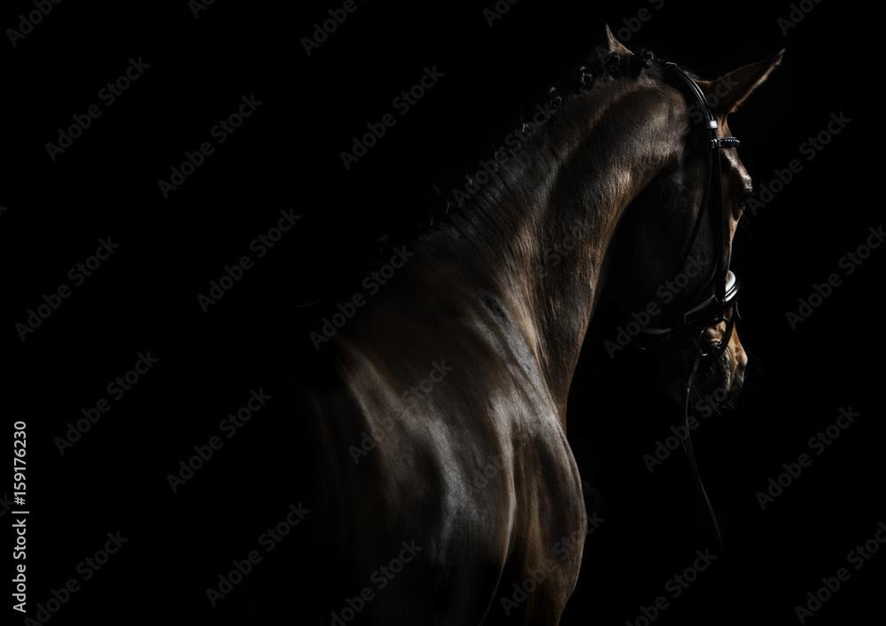 Fototapeta Elegant sport horse