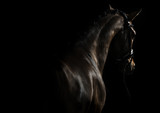 Fototapeta Horses - Elegant sport horse