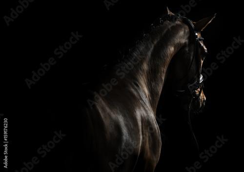 Ingelijste posters Paarden Elegant sport horse